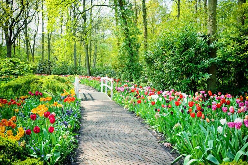 Пестротканые тюльпаны в садах Keukenhof стоковое фото rf