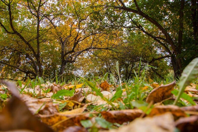 Пестротканые упаденные листья на деревьях предпосылки стоковые фотографии rf
