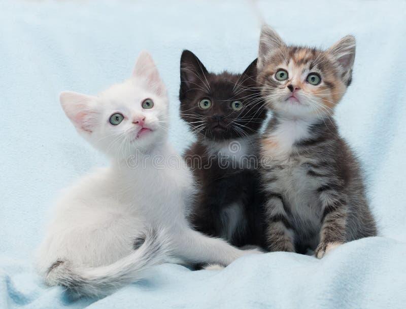 Download Пестротканый котенок 3 смотря вверх на сини Стоковое Фото - изображение насчитывающей angoras, коты: 40581154