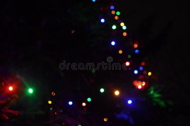 Пестротканый, яркий, motley, накаляя ветвь рождественской елки с гирляндами стоковое фото rf
