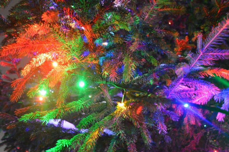Пестротканый, яркий, motley, накаляя ветвь рождественской елки стоковые фото