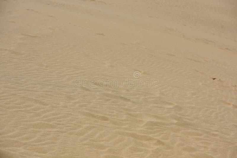 Песчанная дюна в солнечном дне стоковые изображения rf