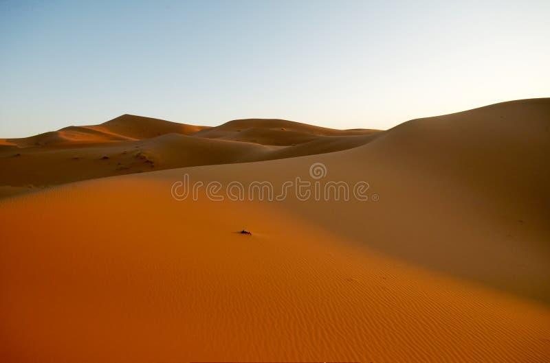Песчанная дюна стоковая фотография