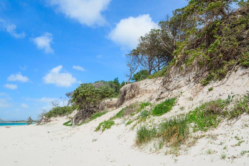 Песчанная дюна в пляже Pia Марии стоковое изображение rf