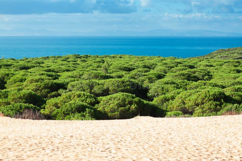 Песчанная дюна пляжа Bolonia, провинции Кадиса, Андалусии, позвоночника стоковые фотографии rf