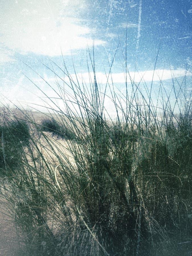 Песчанные дюны lancashire annes st стоковые фотографии rf