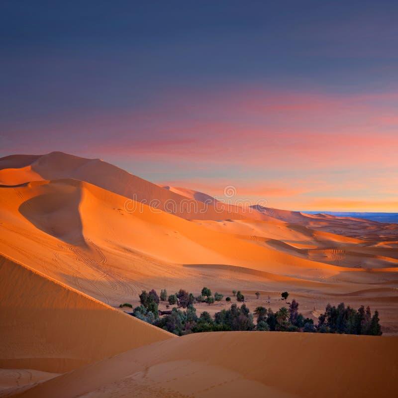 Песчанные дюны в пустыне Сахары в Африке стоковые фотографии rf