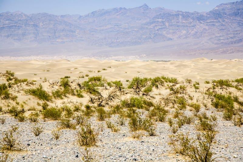 Песчанные дюны квартир Mesquite дезертируют, Death Valley стоковые изображения