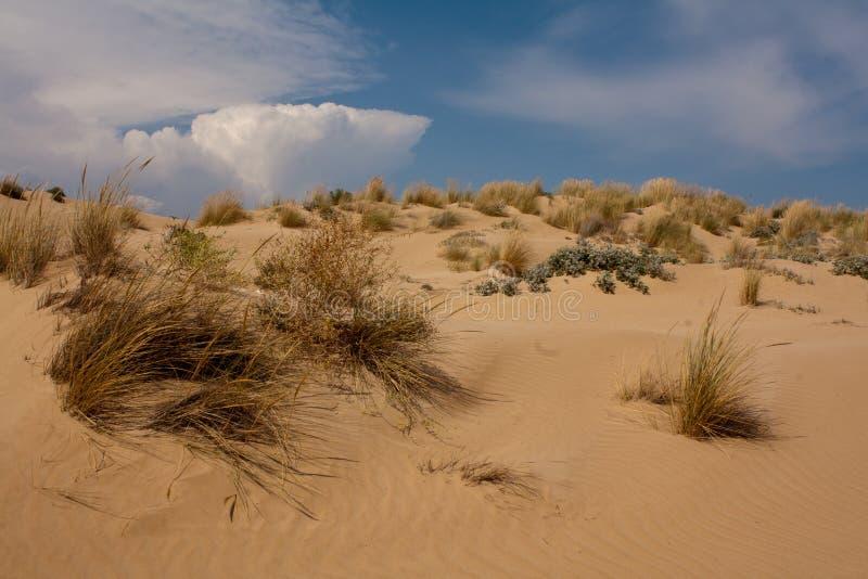 Песчанные дюны на пляже Sampieri стоковая фотография