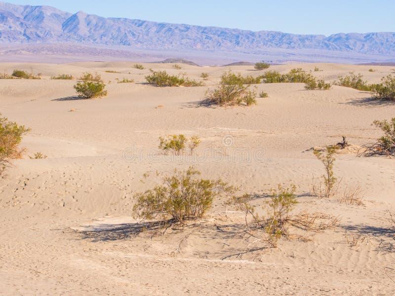Download Песчанные дюны Mesquite плоские Стоковое Изображение - изображение насчитывающей запустело, environment: 37929637