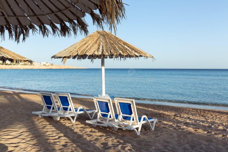 Песчаный пляж с пальмами с перголой металла и пластиковыми шезлонгами Шезлонг под зонтиком стоковые изображения