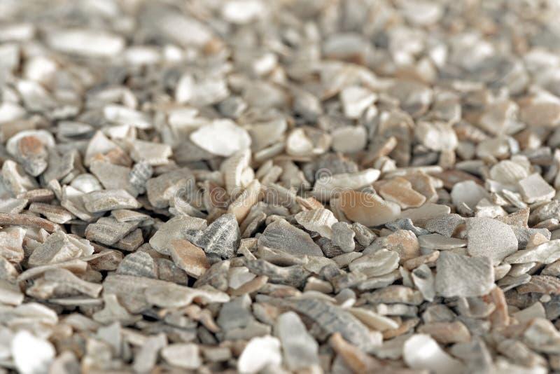 Песчинка Seashell стоковое изображение