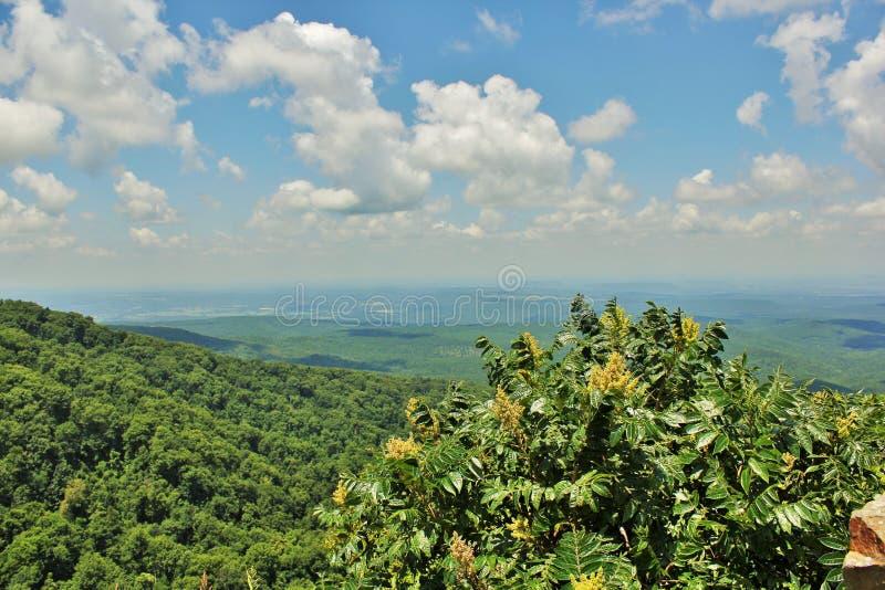 Петит Джин River Valley стоковое изображение rf