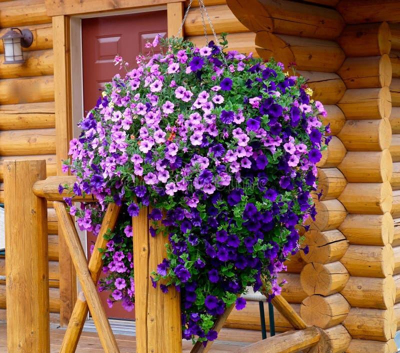 Петунья на крылечке деревянной кабины каникул стоковое изображение