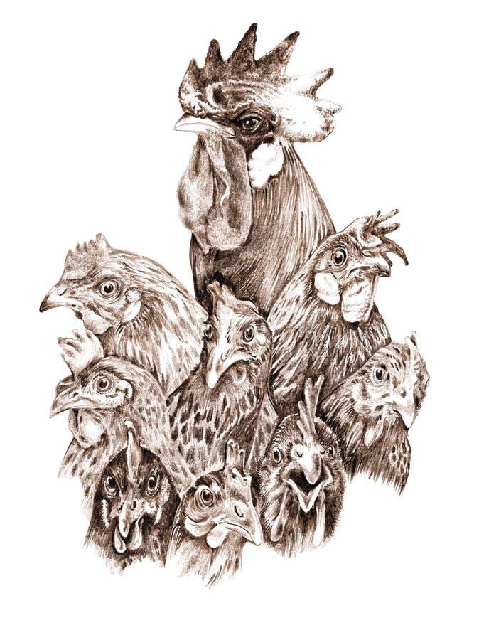 Петух и курицы стоковые изображения rf
