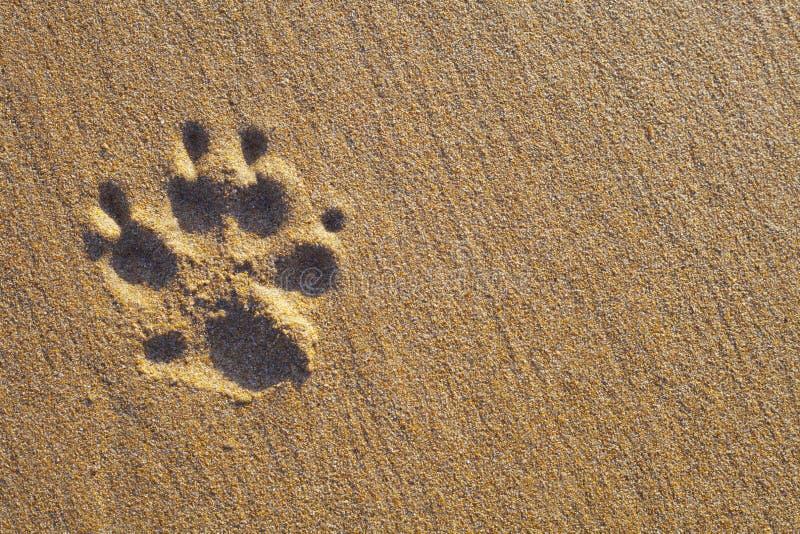 Печать лапки собаки на песке стоковые фото