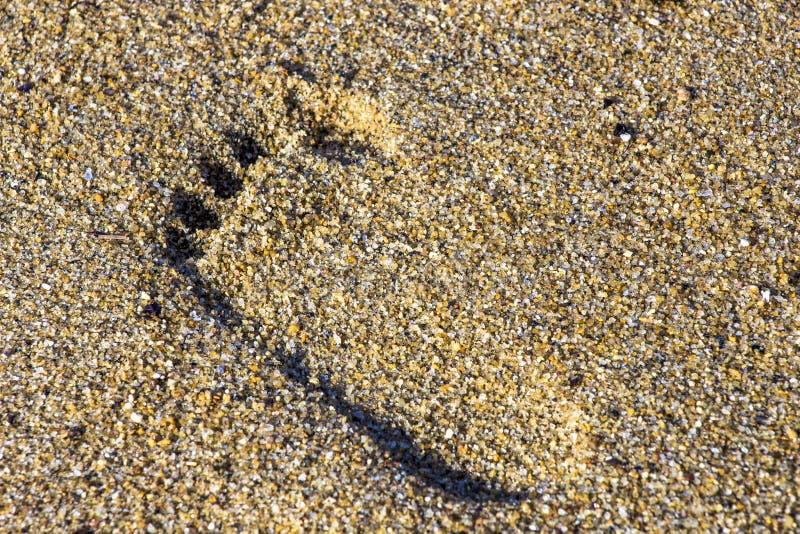 Печать ноги на песке стоковое фото