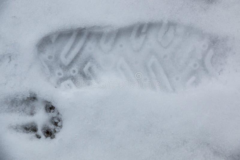 Печать ноги человеческого ботинка на белом снеге стоковое изображение rf
