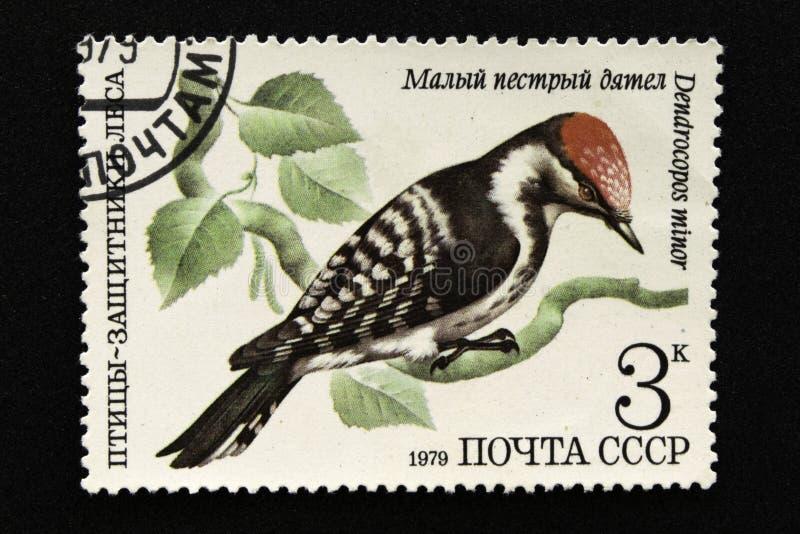 Печать почтового сбора СССР, серия - птицы - демонстранты леса, 1979 стоковое фото