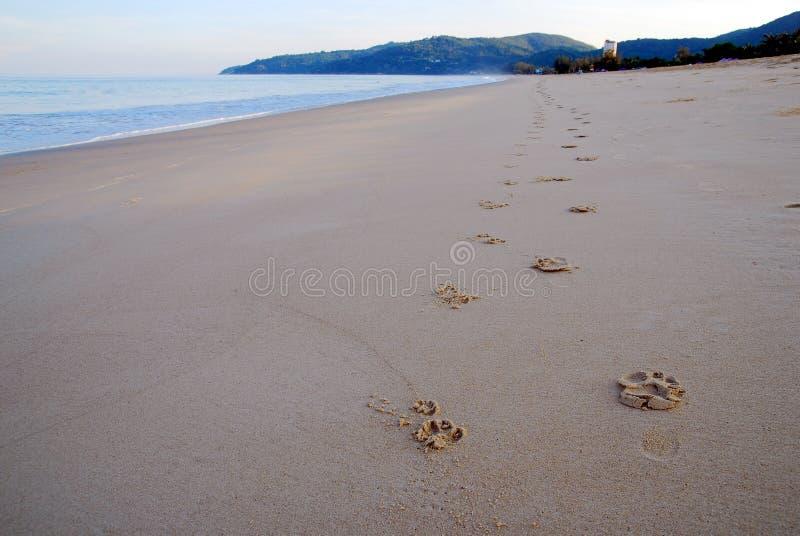 Печать ont ноги пляж стоковое фото rf