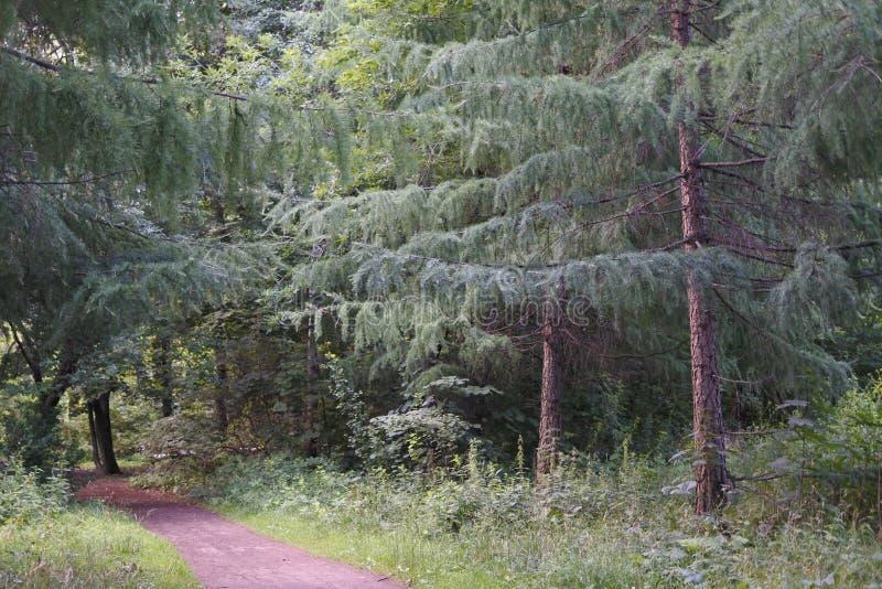 Пешая тропа в древесинах Лес Центральной Европы стоковые изображения