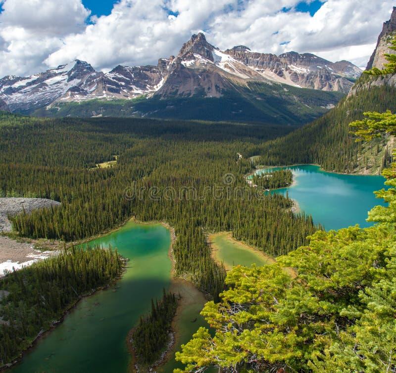 Пешая тропа озера Opabin красивая в пасмурном дне весной, Yoho, Канада стоковые изображения