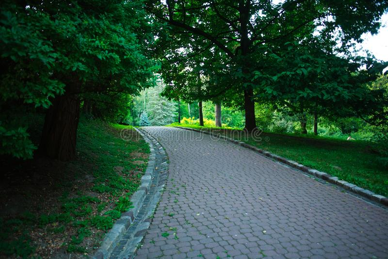 Пешеходный путь в парке города зеленого цвета лета на предпосылке деревьев стоковое фото