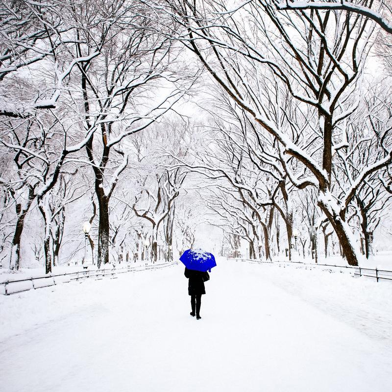 Пешеход в Central Park, Нью-Йорке в зиме стоковое изображение