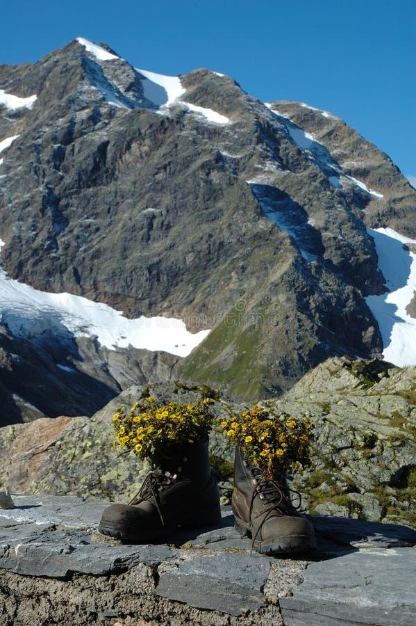 Пешие ботинки с цветками внутрь в горах стоковое фото rf