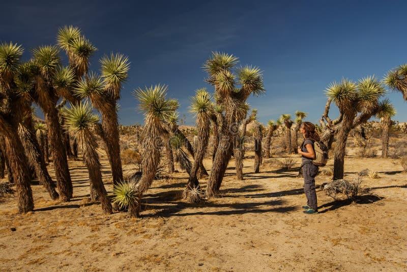 Пешие прогулки в национальном парке Джошуа стоковые изображения rf