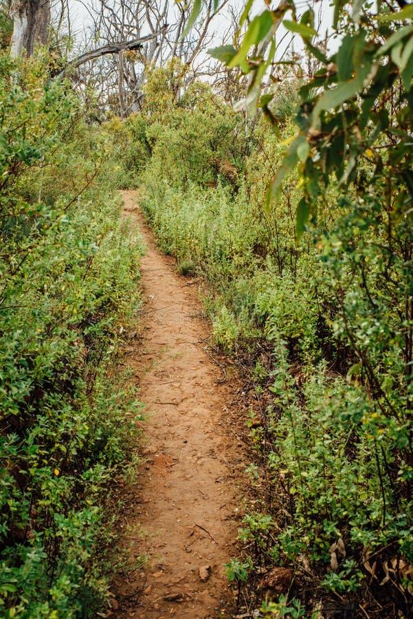 Пеший путь вдоль тропы Numbat, Gidgegannup, западной Австралии, Австралии стоковые фото