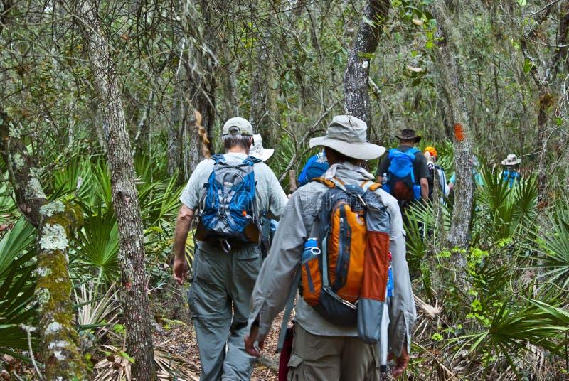 Пеший туризм в болотистых низменностях стоковая фотография rf