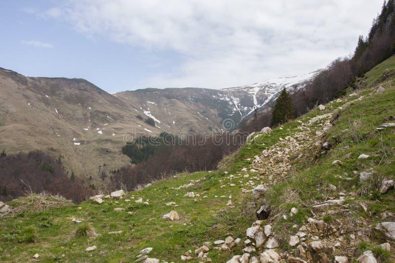 Пеший туризм в горах Rodnei стоковое изображение