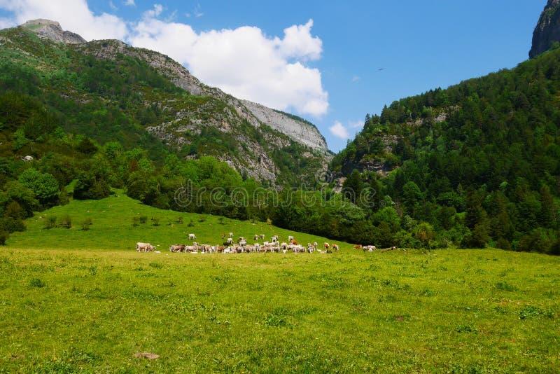 Пеший туризм в valle de bujaruelo стоковые изображения rf