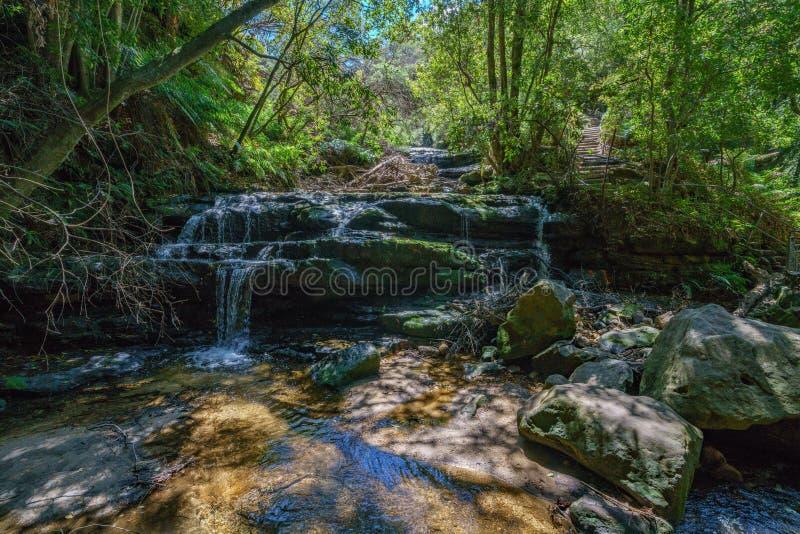 Пеший туризм каскадов leura идя след, голубые горы, Австралия стоковое изображение
