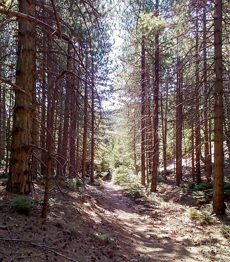 Пеший туризм через путь леса на горе Parnitha стоковые изображения rf