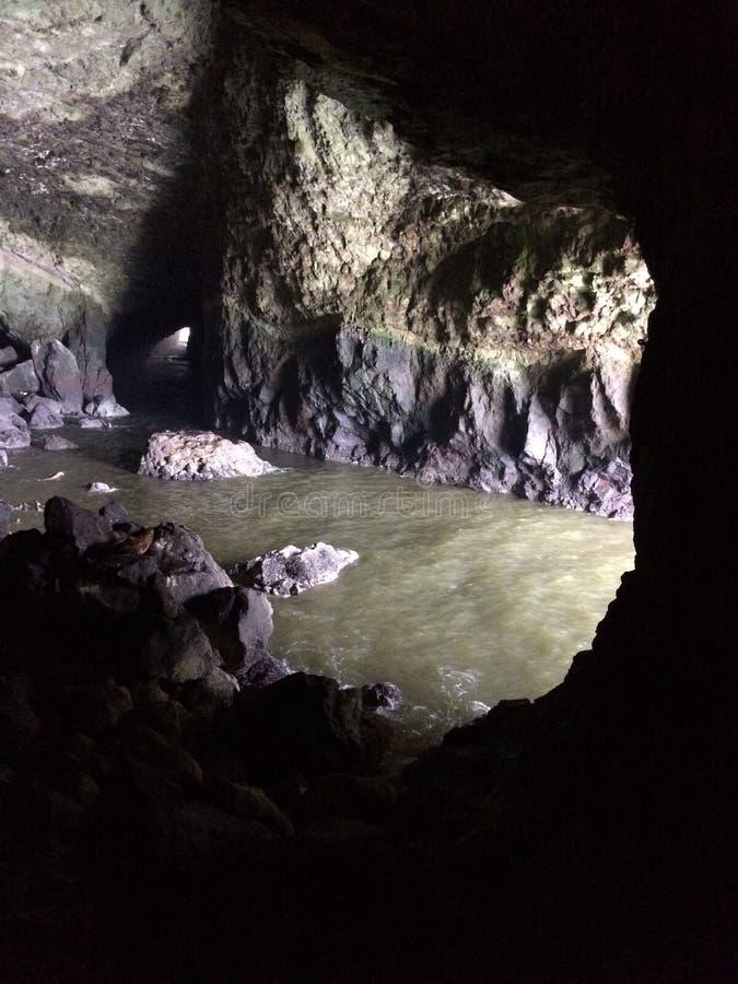 Пещеры морсого льва в Флоренсе, Орегоне стоковые изображения rf
