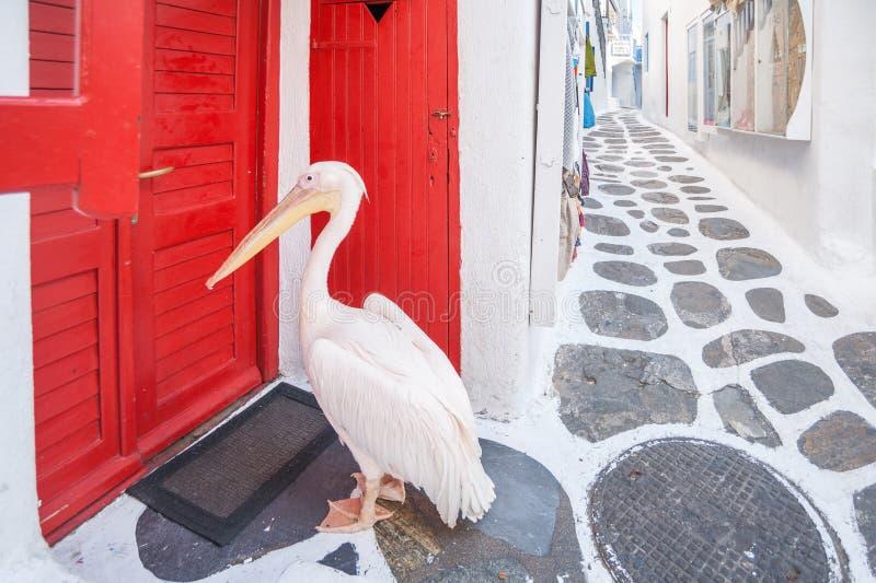 Пеликан на Mykonos стоковые фотографии rf