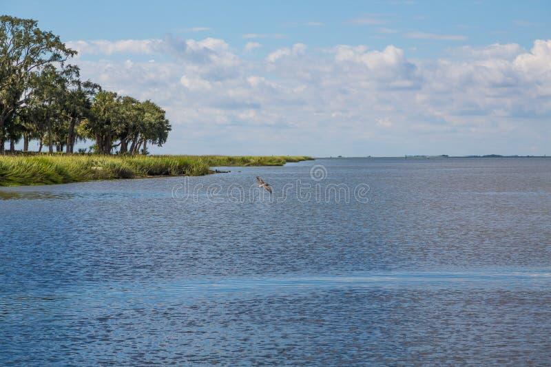 Пеликан Crusing над открытым морем в заливе стоковая фотография rf