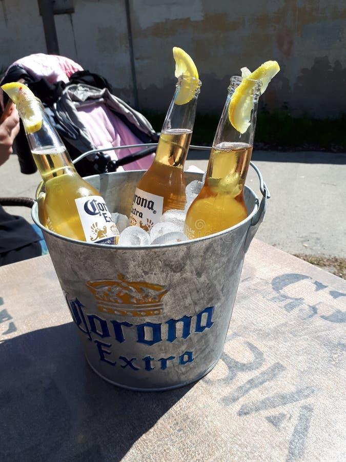 Пиво короны стоковая фотография rf