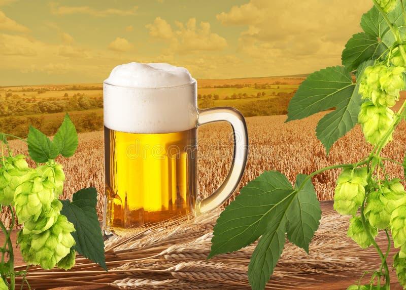 Пиво с хмелями стоковая фотография