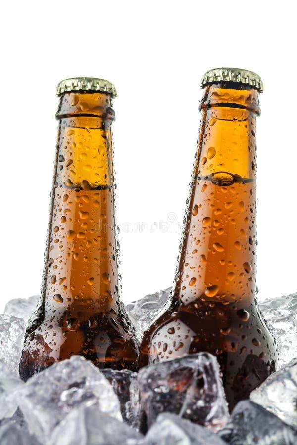 Пив на льде стоковые фото
