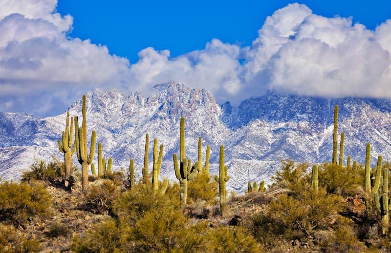 4 пика, пустыня Sonoran стоковое фото rf
