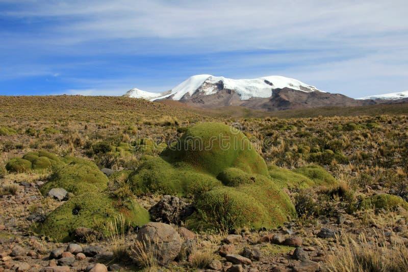 3 пика coropuna вулкана в андийских горах Перу стоковая фотография