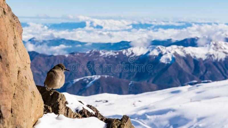 Пики и птицы снега от пика на El Колорадо стоковые фотографии rf