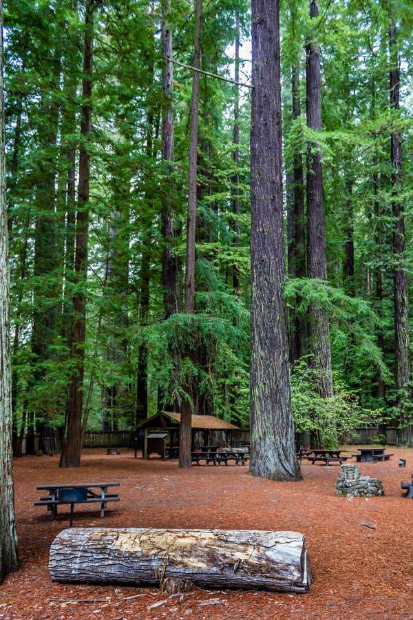 Пикник в redwoods стоковое изображение rf