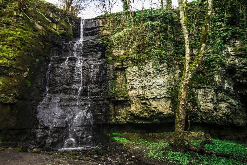 Пиковые деревья зимы водопада района стоковое фото rf