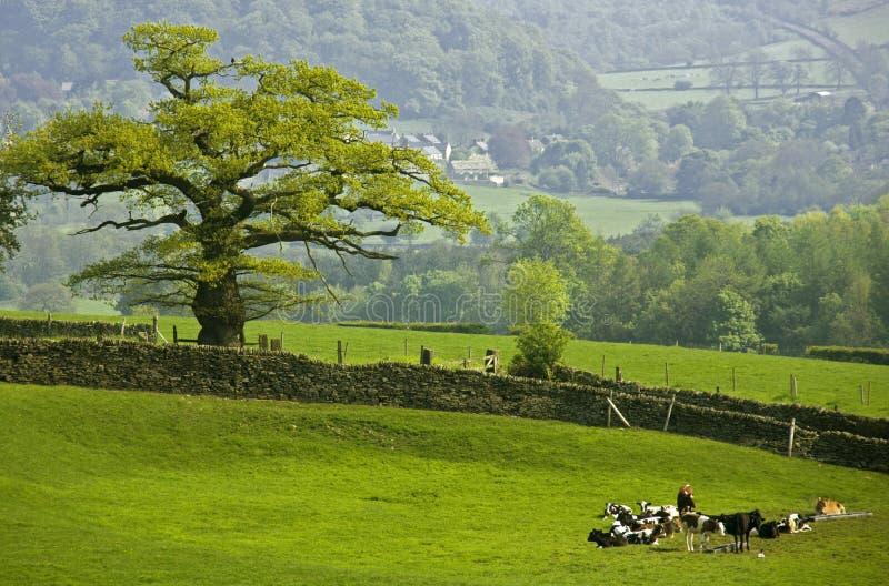 пик национального парка Англии заречья derbyshire стоковые изображения