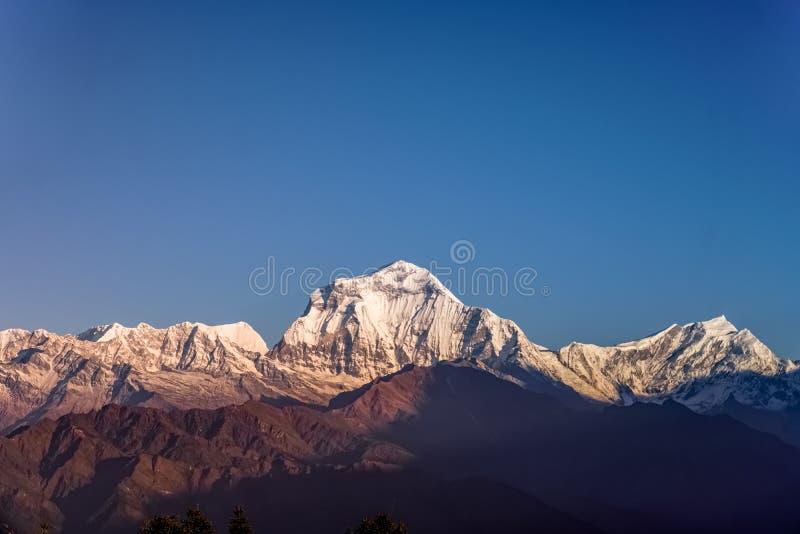 Пик снега горы Dhaulagiri на заходе солнца в Гималаях в Непале стоковые фото