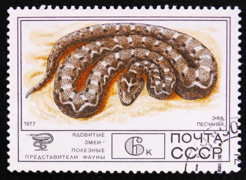 Пил-вычисленная по маcштабу гадюка, carinatus Echis, около 1977 стоковая фотография
